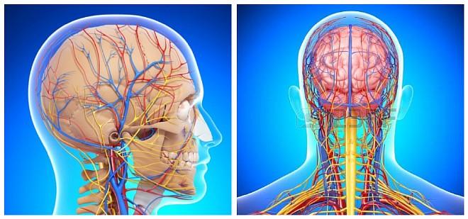 Гипотония сосудов головного мозга