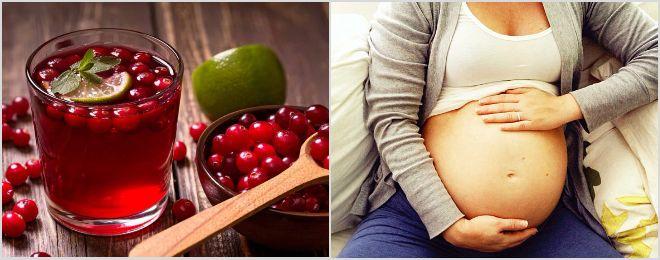 Клюквенный морс при беременности